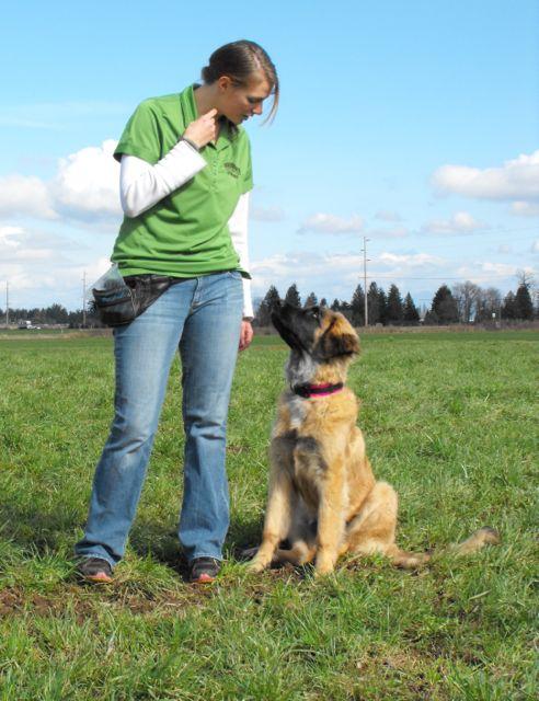 Whatcom Dog Training