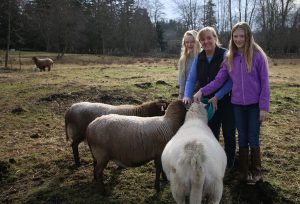 Tracy and her daughters Ava and Rose care for their small flock of Katahdin sheep on their hobby farm in Ferndale. Photo credit: Theresa Golden.