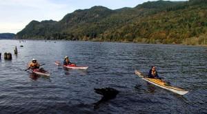 sea kayak bellingham