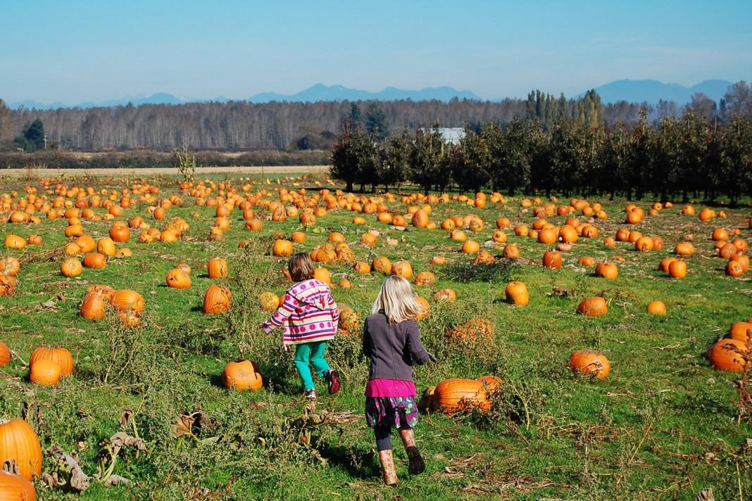 pumpkin patch bellingham