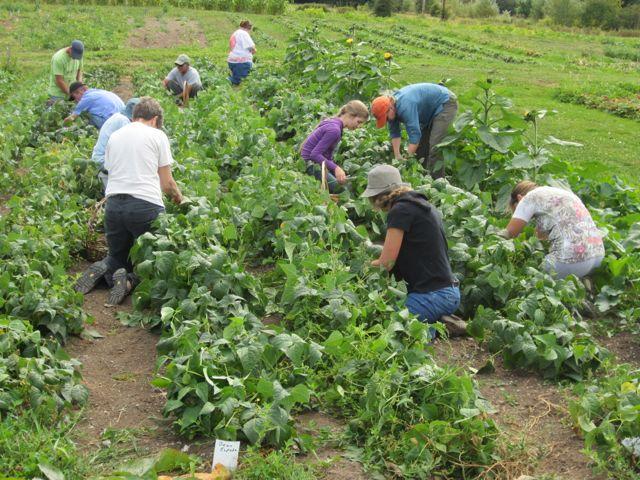u-pick farm bellingham
