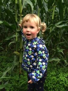 corn maze bellingham
