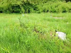 An example of a final resting place in The Meadow with pasture grasses and native plants. Photo courtesy: Brian Flowers.