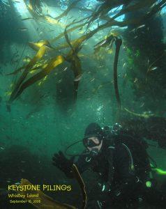 washington divers