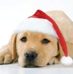 santa dog photo