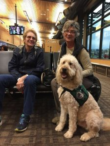 airport dog therapy