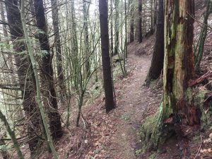 This narrow cross-country style trail is at the top of Galbraith. Photo credit: Taylor Bailey.