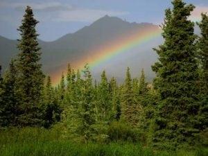 C Darwin Rainbow