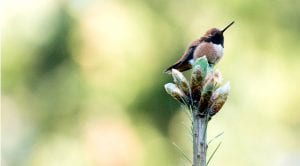 Spring Birding East and West of the Cascades @ North Cascades Environmental Learning Center