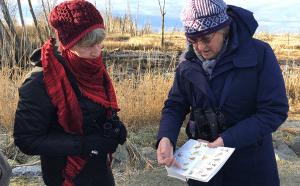 Winter Visitors: Birding in the Skagit Flats @ Lower Skagit VAlley