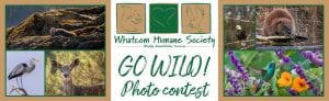 GO WILD Photo Contest @ Whatcom Humane Society
