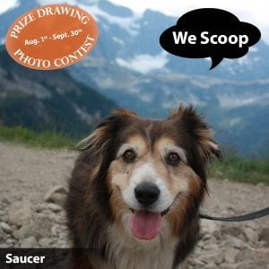 We Scoop Prize Drawing and Dog Photo Contest
