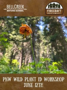 PNW WIld Plant ID Workshop @ Bell Creek Nature School