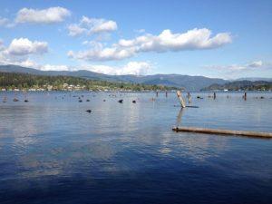 Self-Guided Lake Whatcom Tour @ Hertz Trail